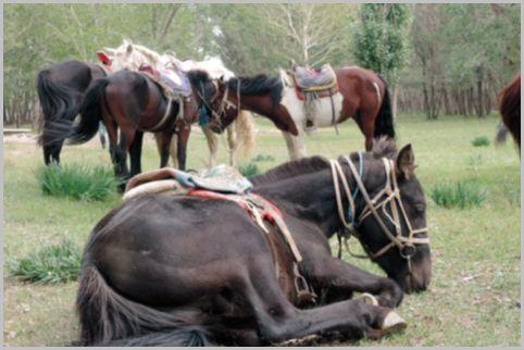 モンゴル語には馬の基本的な毛色だけで20種類