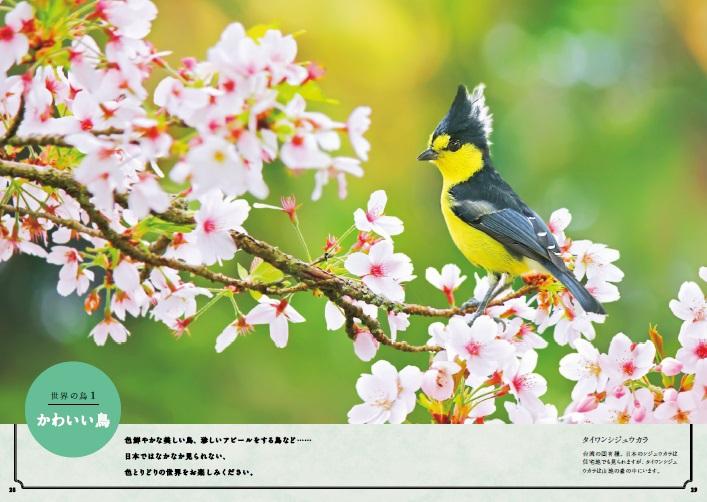 世界でいちばん素敵な鳥の教室